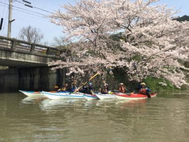桜満開!シーカヤックで行く近江八幡水郷めぐり