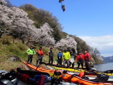 湖上に映える満開の桜:海津大崎シーカヤック・ツーリング20170415