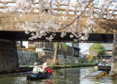 カヤックで 巡る水郷と八幡堀の満開桜!! 近江八幡でお花見漕ぎ